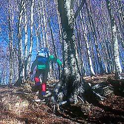 Climbing in the woods of the Apennines of Berceto