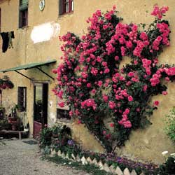 A courtyard of a farmhouse in Chianti