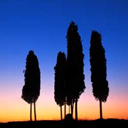 Dawn in Val d'Orcia