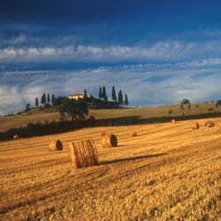 Landscape at dawn in Val d'Orcia