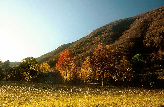 The Tuscan Apennines. A wood in Autumn