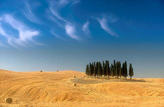 Val d'Orcia. The famous cypresses with a summer look